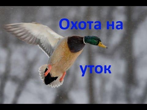 Охота на уток №3  Duck Hunting