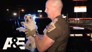 Live PD: Puppy Pals (Season 3)   A&E