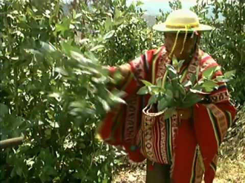 النظرة الكونيّة عند الكلاوايا في منطقة الأنديز - التراث غير المادي - -  UNESCO