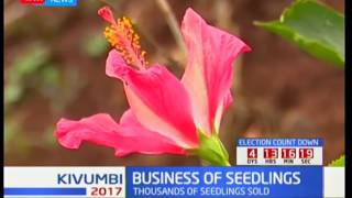 Seedling business helping conserve the environment