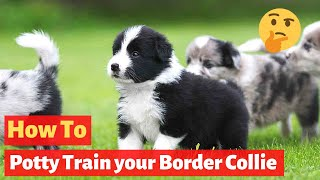 How to house train a Border Collie? The most easiest method possible..