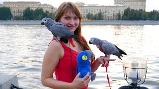 Russia - Hope Parrot Comes to Visit Moscow