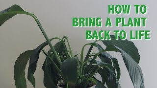 How to Bring a Plant Back to Life | Pretty in Green Plants