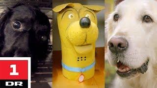 Familiehund vs. narkohund | Versus | DR1