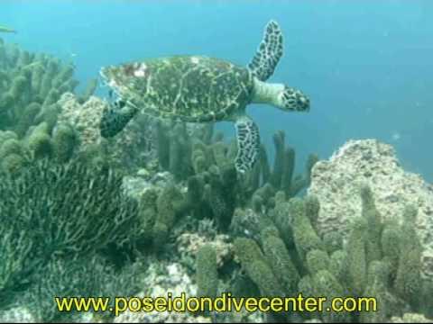 Schildkröte in Taganga