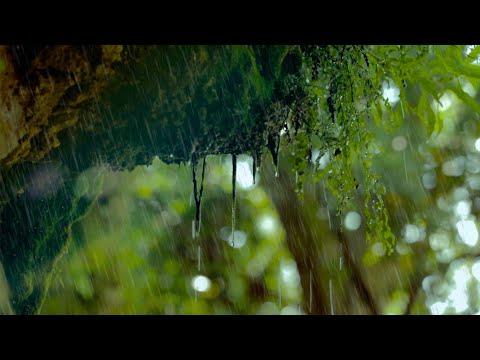Regen in der Natur: Regengeräusche zum Einschlafen (6 Stunden) Naturgeräusche in 4K