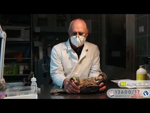 Mumiyo mi ez a pikkelysömör kezelése