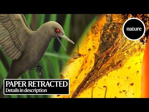 Descubren el fósil de dinosaurio más pequeño hallado hasta el momento conservado en ámbar