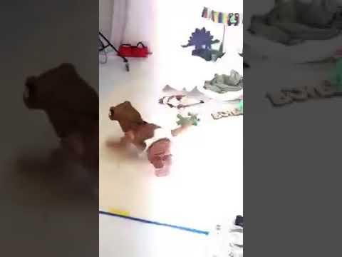 Dinosaurio bebé sale de su huevo