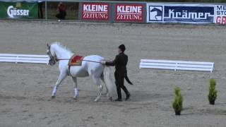 preview picture of video 'Lipizzaner Herbstparade Piber 2014'