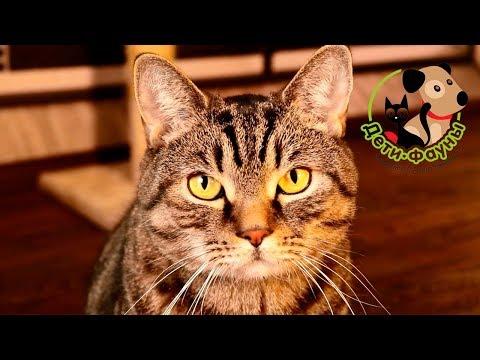 Профилактика мочекаменной болезни у кошек 7 факторов, на которые стоит обратить внимание