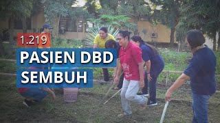 1.219 Pasien DBD di Sikka, NTT Dinyatakan Sembuh, 102 Masih Dirawat
