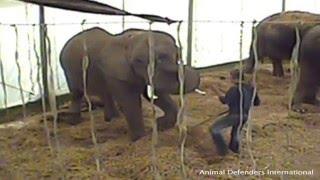 ADI Watchlist: Lars Holscher, Elephant trainer