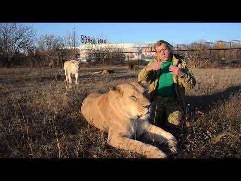 Курянин – владелец двух зоопарков в Крыму – вынужден усыпить 30 медведей