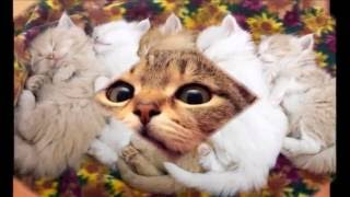 Funny Cute Cat Wallpaper Compilation - CHEER UP!! 1.5 MINUTE PURE HAPPINESS! 1080p FULL HD!