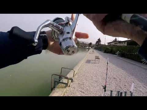 La pesca a cantare a voce spiegata di video