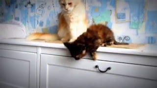 Смотреть онлайн Мама-кошка воспитывает котенка смелым