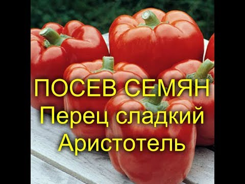 ПОСЕВ СЕМЯН Перец сладкий Аристотель