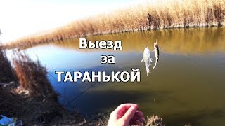 Ловля тарани осенью на кубани