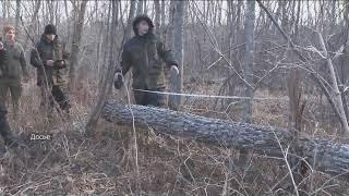 Нелегальную вырубку деревьев выявили специалисты