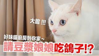 做菜給豆漿娘娘~竟然是鴿子!?【貓轉食副食】好味貓鮮食廚房EP142
