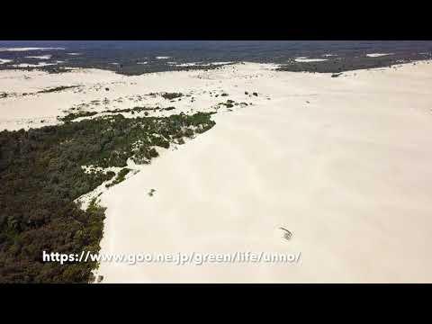 内陸の砂丘 Yeagarup Dunes