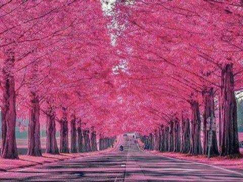 Pink Fower wallpaper for Desktop, Pink Flower Photo
