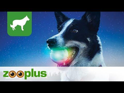 Hundespielzeug | Leuchtender LED-Ball Nite Ize GlowStreak l zooplus
