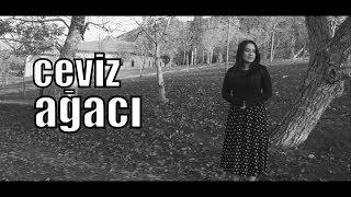 Ceviz Ağacı   Kısa Film