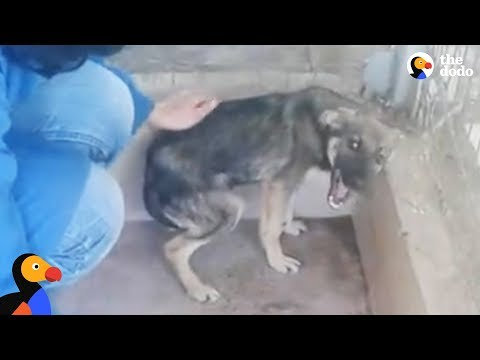 Dog Cries Every Time He's Touched — Until He Meets This Woman   The Dodo
