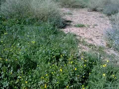 ربيع السليمي  ( المغيلة ) الخميس  26  صفر 1431 هـ