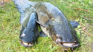 Ловля рыбы на днепре в днепропетровске сома