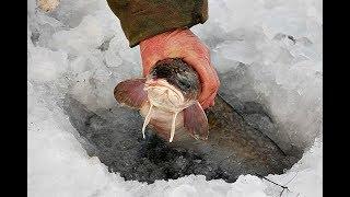 Наживки для ловли рыбы зимой