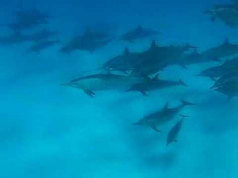 Südsafari St.Johns, St. John´s Reef,Ägypten