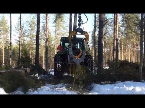 40LFe pine processing