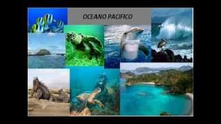 La biorregion oceanica DECIMO ''E'' 01
