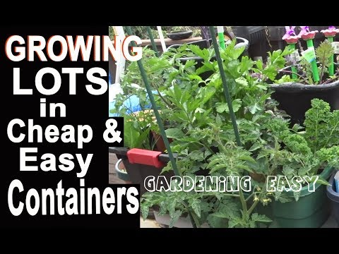 Container Gardening EASY Growing Food Healthly Onions Tomatoes Kale Composting in Place