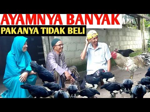 , title : 'Pakan Ternak Ayam Kampung| Tanpa Modal