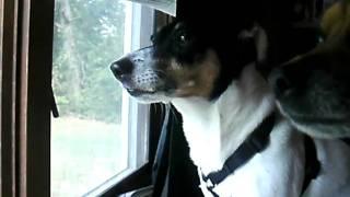 dog singing to get low