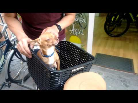 Cestas de bici para mascotas