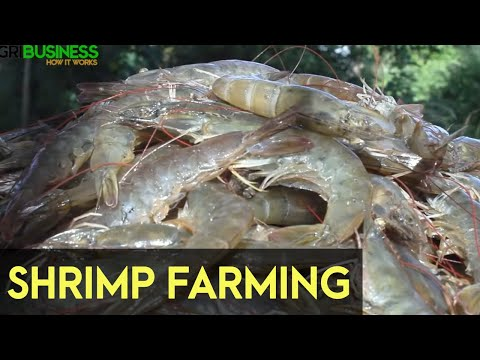 , title : 'Shrimp Farming in the Philippines