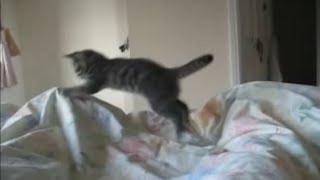 Veja como esse gatinho acorda seu dono ao amanhecer