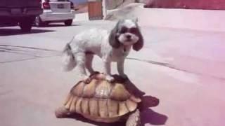 Turtle Dog Gettin' Low