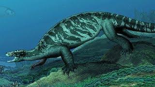 The Evolution of Sea Turtles