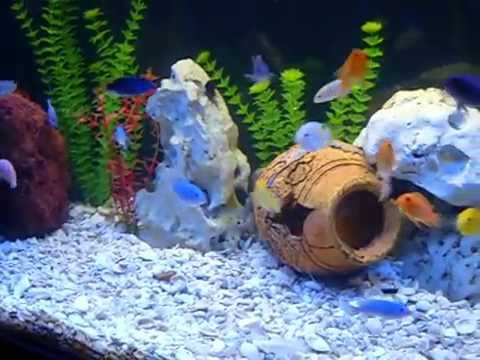 Fish to put in a 90 gallon tank yahoo answers for 10 fish are in a tank riddle answer