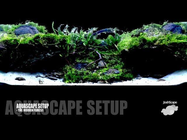 Aquascape Setup - The Hidden Forest