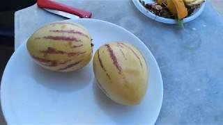 Дегустация, как его называют продавцы фруктов, гибрида помидора и дыни - попая.