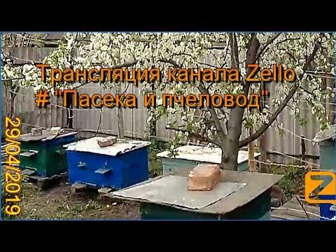 """Трансляция канала Zello """"Пасека и пчеловод"""". (Обзор за день) 29/04/2019"""