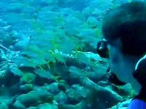 Fische, Bonaire,Niederländische Antillen