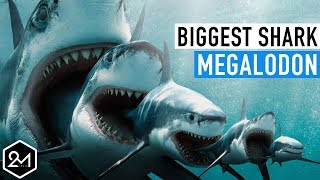 Top 10 Unbelievable Facts About The Biggest Shark Ever : Megalodon